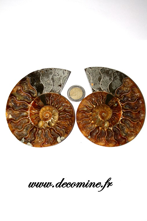 paire ammonite coupe madagascar 115 mm