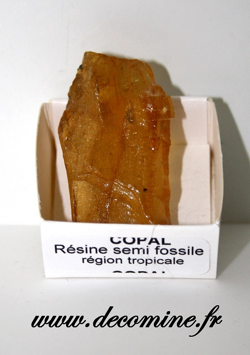 copal resine fossile