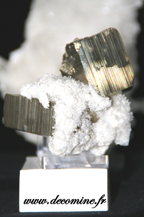 pyrite sur gangue de quartz collection